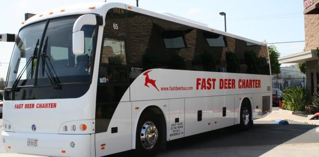 fast deer bus